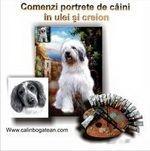 comenzi_portretecaini