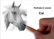 Portrete cai desene în creion