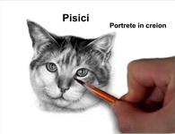 Portrete pisici în creion cărbune desene pisici