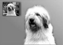 Comenzi portrete de câini în creion desene la comandă