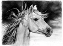 Comenzi portrete de cai în creion desene la comandă