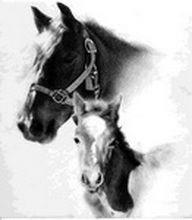 Portret desen în creion cu doi cai la comandă