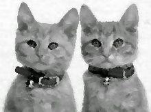 Comenzi portrete cu două pisici în creion desene