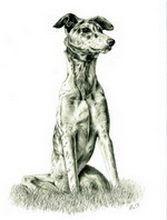 Reprezentare anatomică de câine în picioare desen în creion câini