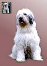 Imaginea 2. Portret de câine în picioare pictură în ulei pe fond neutru