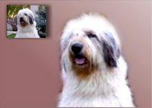 Portret de câine bust pictat pe un fundal neutru