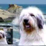 Imaginea 3. Portret de câine bust pictură în ulei pe fond scenic