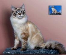 Imaginea 2. Portret de pisică în picioare pictură în ulei pe fond neutru