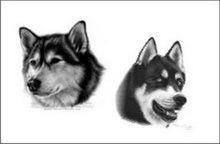 Portret desen în creion cu doi câini la comandă